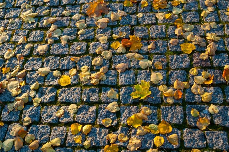 秋天背景特写镜头上色常春藤叶子橙红 在织地不很细石路面的下落的橙色秋叶 免版税图库摄影