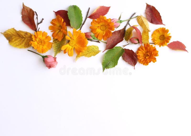秋天背景特写镜头上色常春藤叶子橙红  秋天装饰概念 平的位置 库存照片