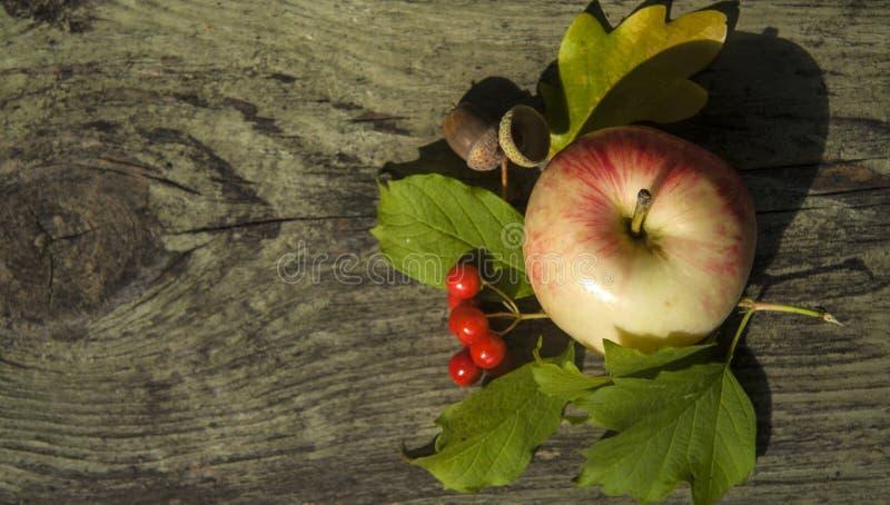 秋天背景苹果、橡子和荚莲属的植物 免版税库存照片