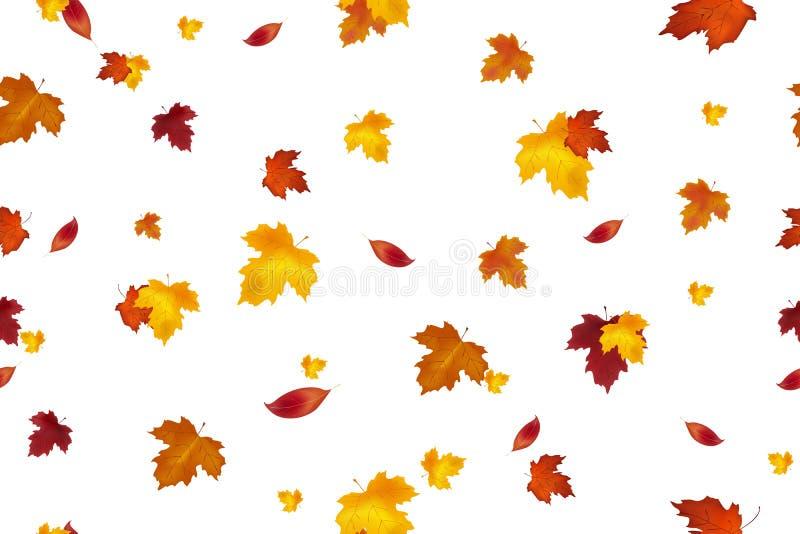 秋天背景设计 无缝的模式 秋天落红色,黄色,桔子和在白色背景隔绝的褐色叶子 Vect 库存例证