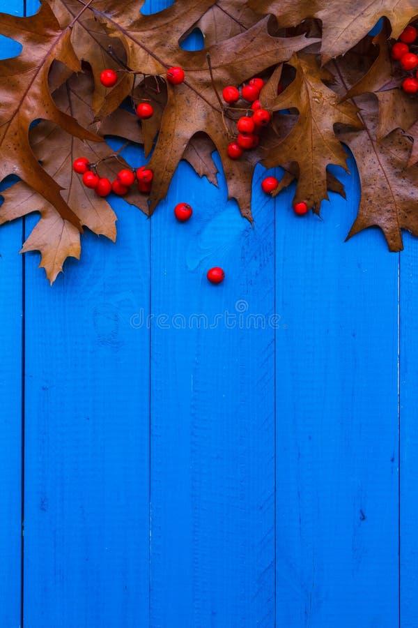 秋天背景离开花揪果子蓝色板 图库摄影