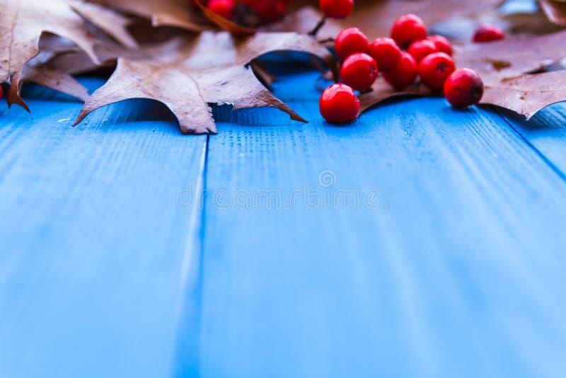 秋天背景离开花揪果子蓝色板 免版税库存图片