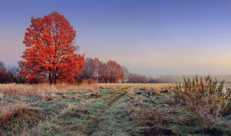 秋天自然风景 在树分支的五颜六色的红色叶子在草甸的有在草的树冰的早晨 免版税库存照片