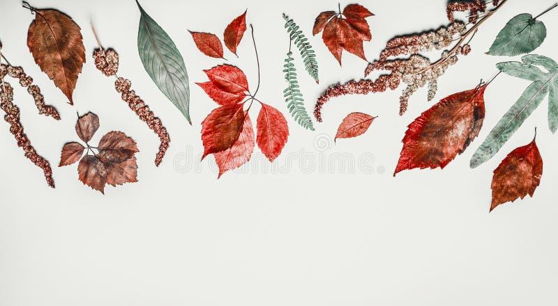 秋天舱内甲板在轻的背景,顶视图放置用各种各样的五颜六色的秋天叶子做的边界 免版税图库摄影