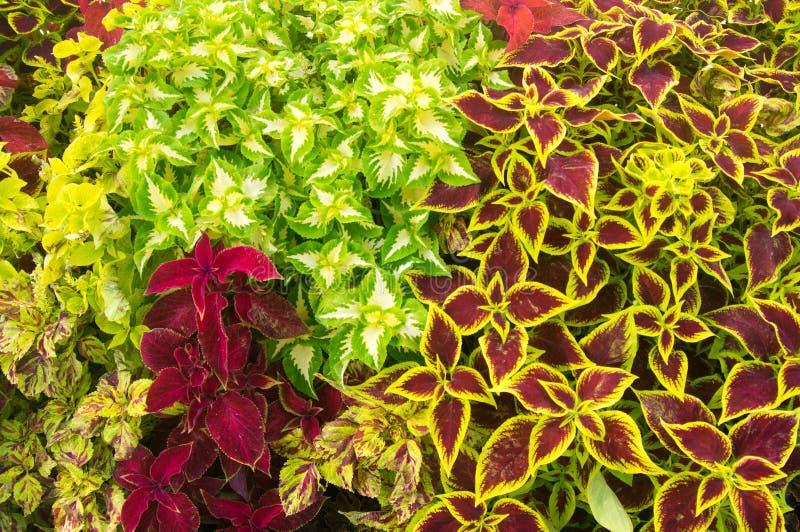 秋天色的植物 免版税库存照片