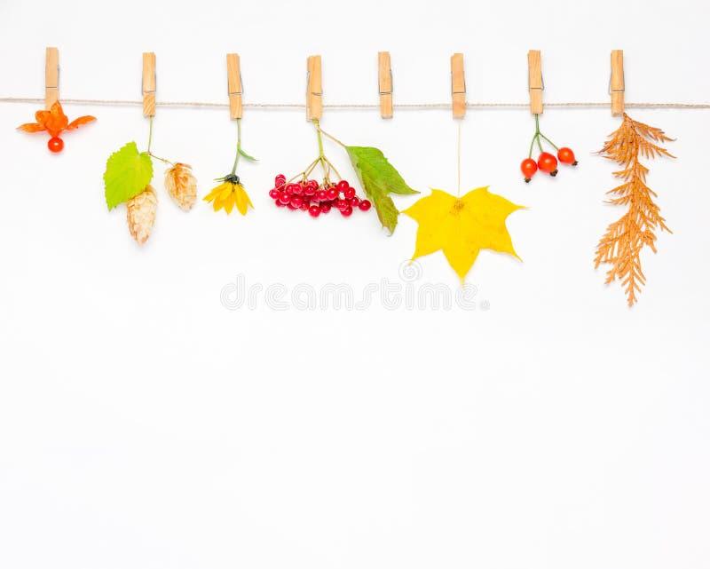 秋天花、槭树叶子、莓果野玫瑰果、红色荚莲属的植物、啤酒花球果树和空泡在白色背景 库存照片