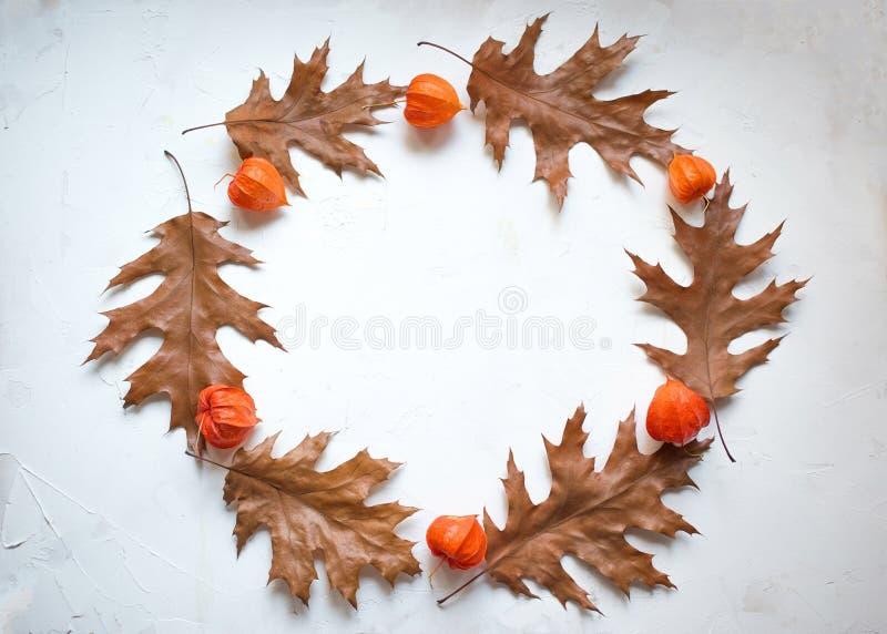 秋天花圈由秋天枫叶和空泡花制成 平的位置,顶视图,拷贝空间 库存照片