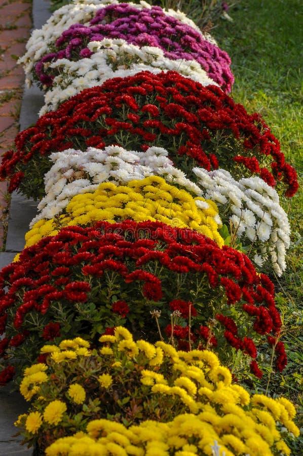 秋天花在一个绿色公园 免版税库存图片