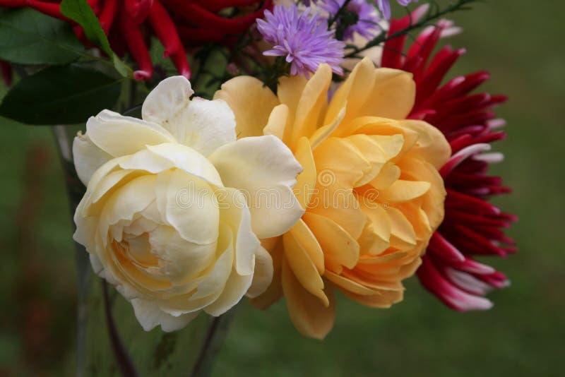 秋天花束的克莱尔奥斯汀和金黄庆祝玫瑰 免版税库存照片