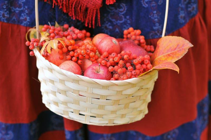 秋天苹果和花楸浆果在篮子 图库摄影