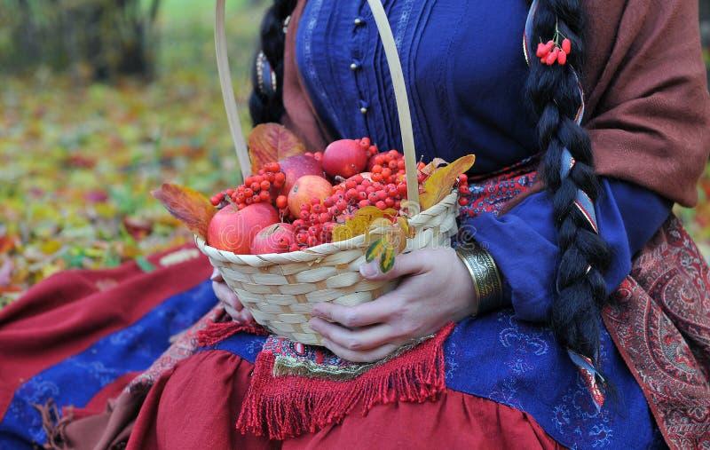 秋天苹果和花楸浆果在篮子 库存照片
