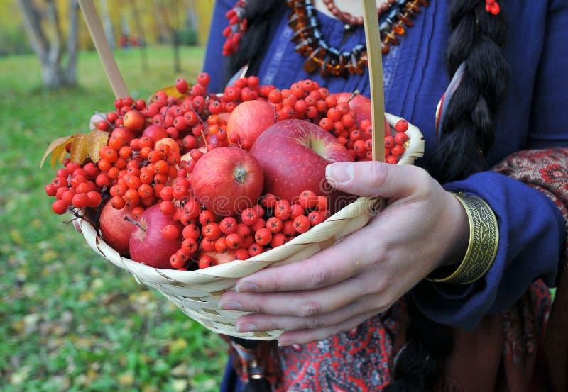 秋天苹果和花楸浆果在篮子 免版税库存照片