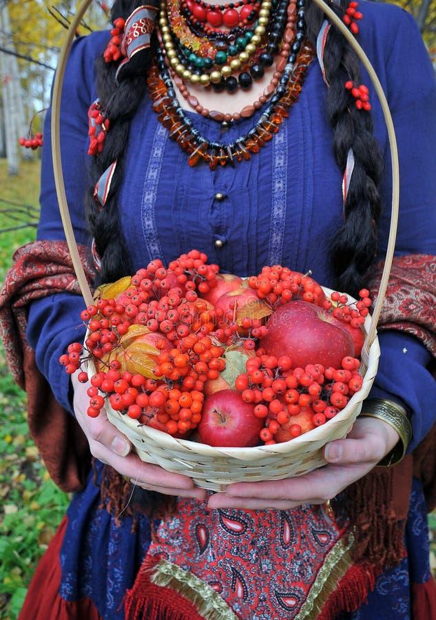 秋天苹果和花楸浆果在篮子 库存图片