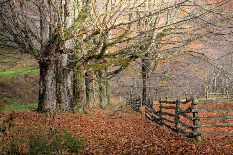 秋天范围结构树 库存照片
