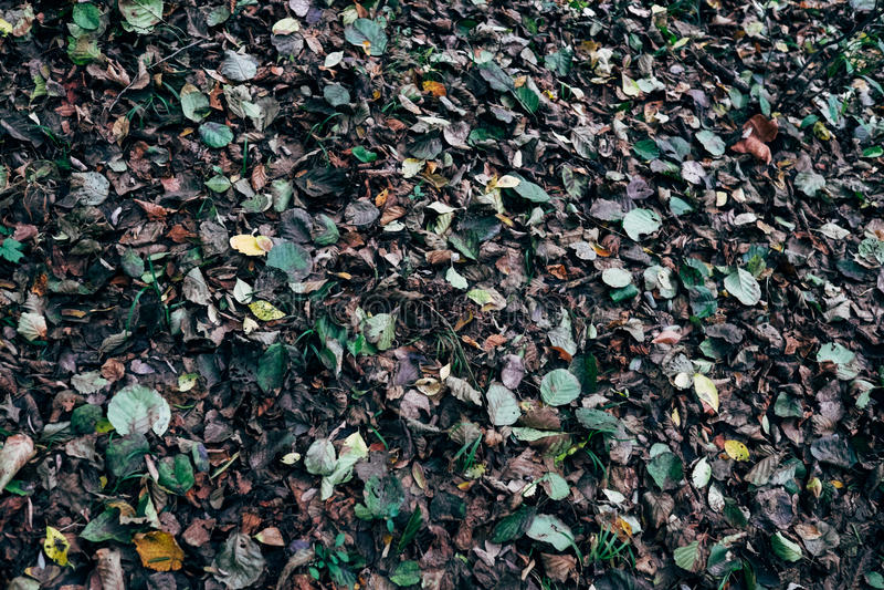 秋天草丛 库存图片