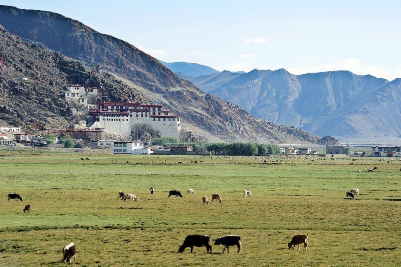 秋天草原在南西藏 库存照片