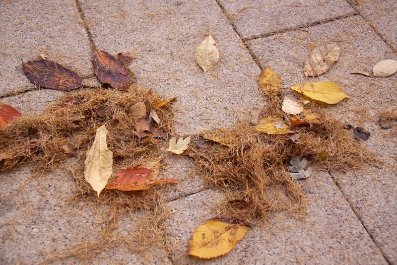 秋天草和叶子,哀伤的心情,消沉 免版税库存图片