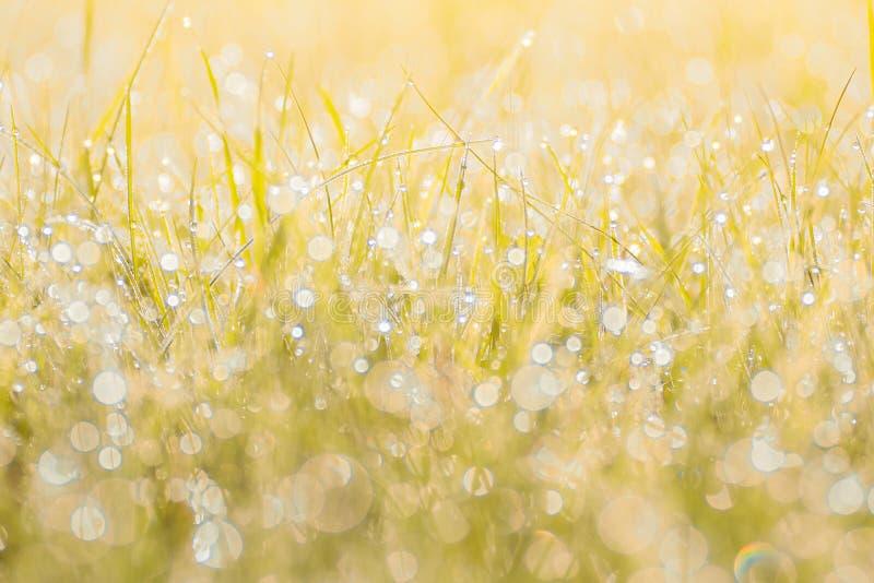 秋天草在日落阳光下 绿色橙黄抽象自然被弄脏的背景 宏指令, bokeh 免版税库存照片