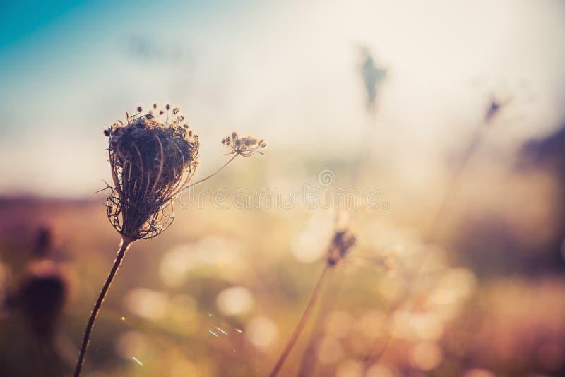 秋天草甸的野花植物 选择聚焦 图库摄影