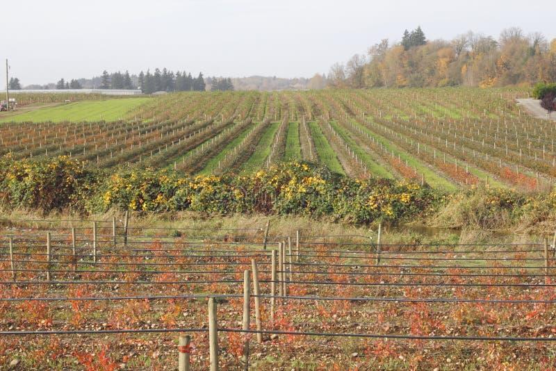 秋天草莓和蓝莓厂 库存图片