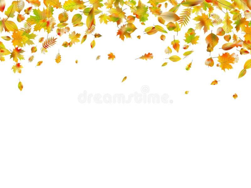 秋天落的叶子 EPS 10向量 皇族释放例证