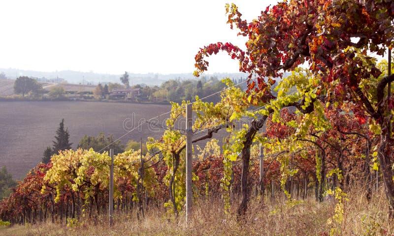 秋天葡萄园在托斯卡纳 意大利navona广场罗马旅行 天空和领域winorada 免版税库存图片
