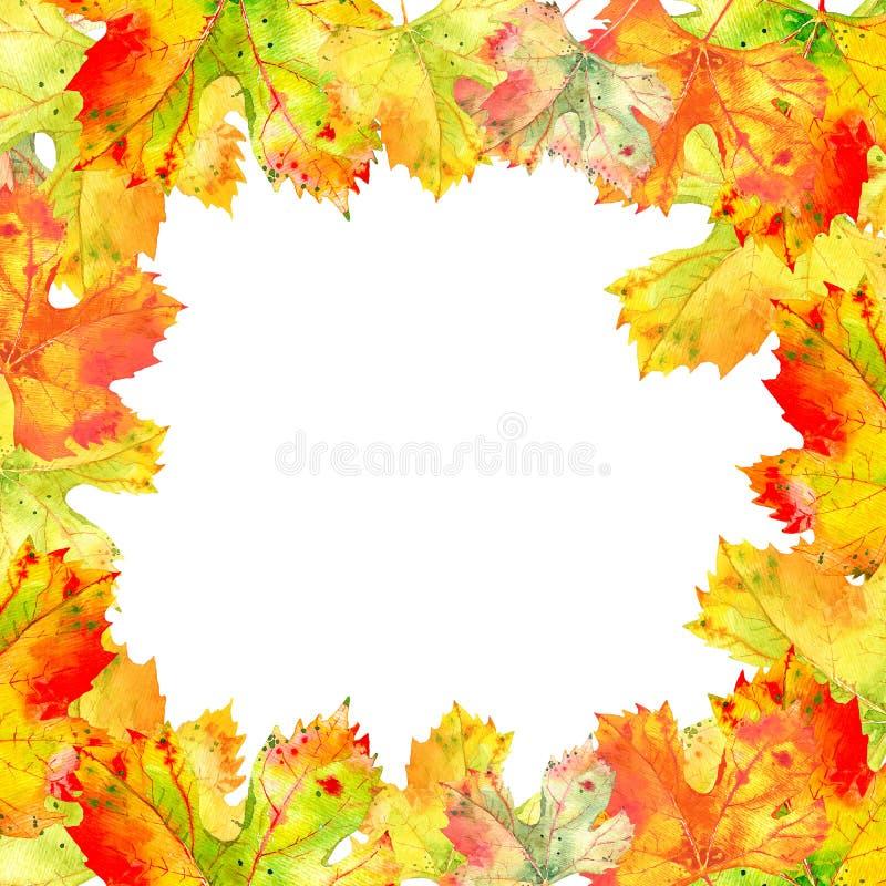 秋天葡萄树叶子方形的框架  在白色背景的秋天叶子 手画现实的水彩 皇族释放例证