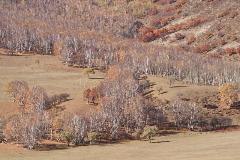 秋天蒙古干草原, Mulan围场满族蒙古族自治县,中国的红色淡色 免版税库存照片