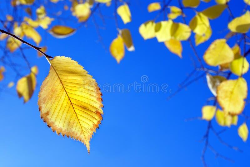 秋天蓝色叶子天空黄色 明亮秋天的背景 免版税库存图片