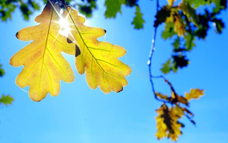 秋天蓝色叶子天空黄色 明亮秋天的背景 免版税图库摄影