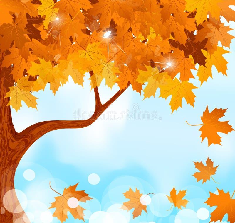 秋天蓝色叶子槭树天空结构树 库存例证