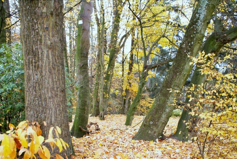 秋天蓝色城市叶子横向天空结构树染黄 Parc阿斯特丽德 库存图片