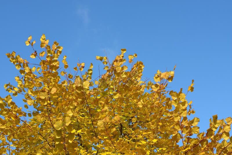 秋天蓝色留下天空 库存照片