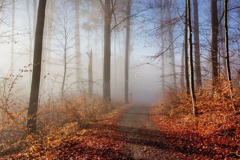 秋天蓝色长的本质遮蔽天空 色的树在森林秋天森林秋天自然的阳光下 库存照片