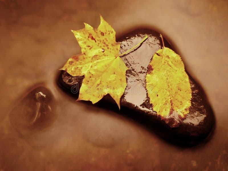 秋天蓝色长的本质遮蔽天空 腐烂的橙红枫叶细节  秋天在黑暗的石头的叶子位置在被弄脏的镜子 免版税库存照片