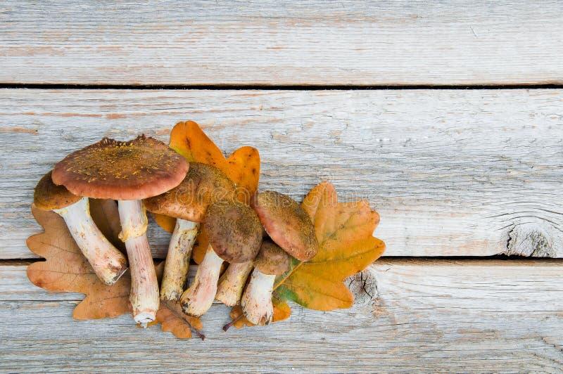 秋天蜂蜜蘑菇在一张木桌上的蜜环菌属mellea 图库摄影