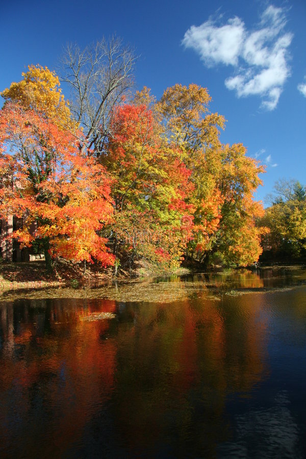 秋天被反射的河结构树 免版税库存图片