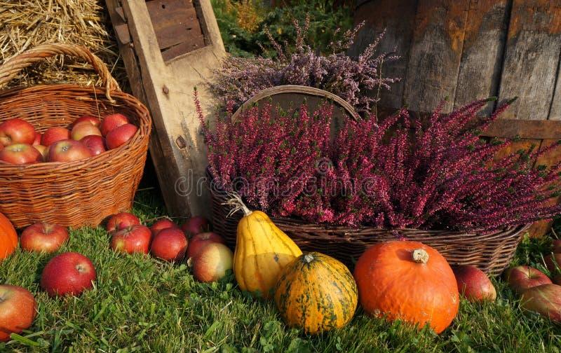 秋天装饰、南瓜、南瓜、石南花花和柳条筐用苹果 库存照片