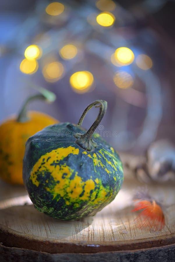 秋天装饰用小南瓜 免版税库存图片