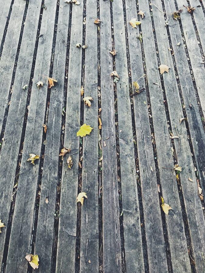 秋天设计要素纹理 库存图片