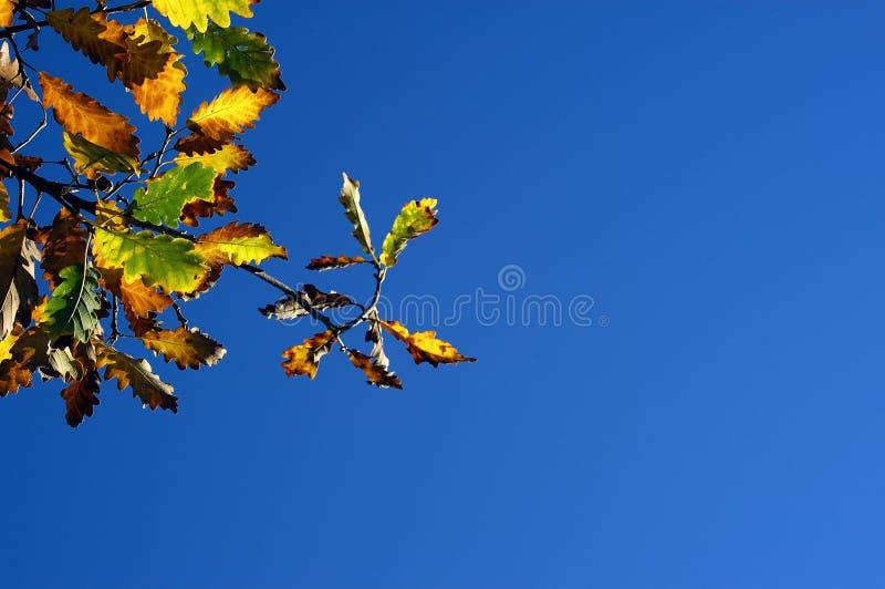 Download 秋天起始 库存图片. 图片 包括有 秋天, 褐色, 叶子, 自治权, brander, 冬天, 绿色, 照亮, 橡木 - 56793