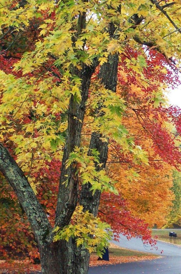 秋天路和秋天颜色在诺克斯维尔田纳西 免版税库存照片