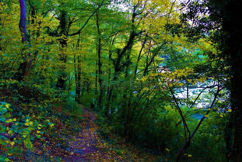 秋天路径在森林里 库存图片