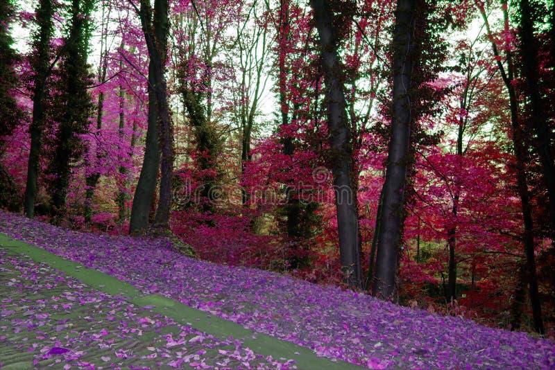 秋天路径在森林里 免版税图库摄影