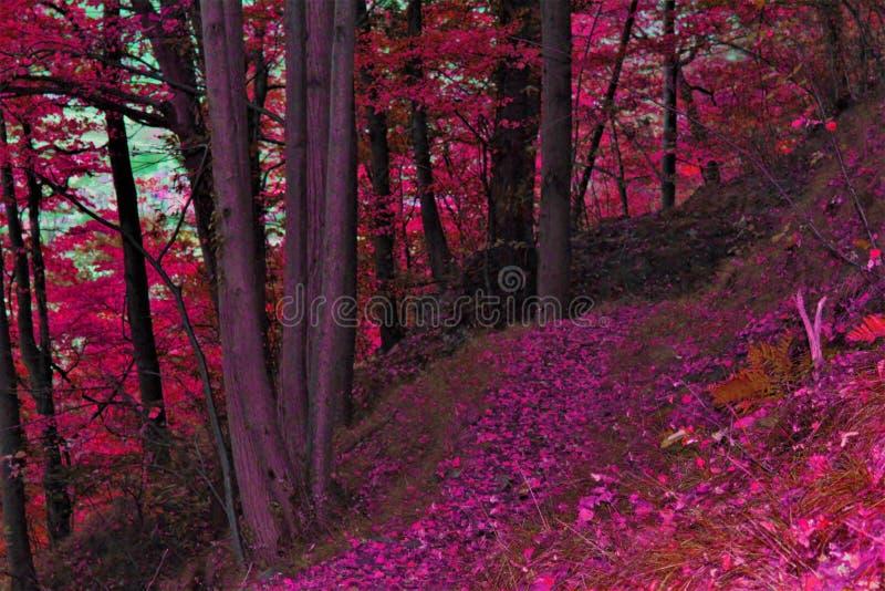秋天路径在森林里 图库摄影