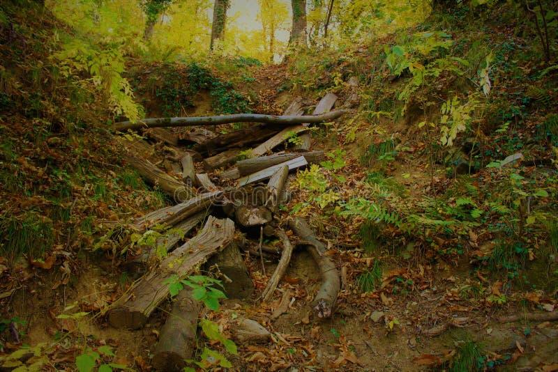 秋天路径在森林里 免版税库存图片