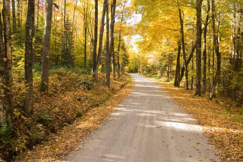 秋天路径绕森林 免版税图库摄影