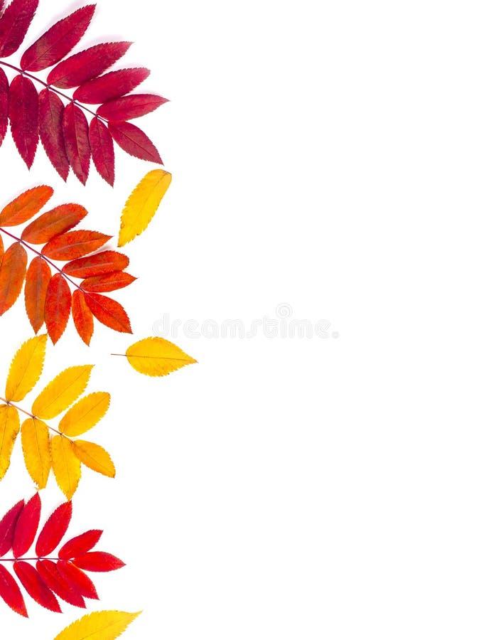 秋天边界由叶子制成在白色背景 免版税库存照片