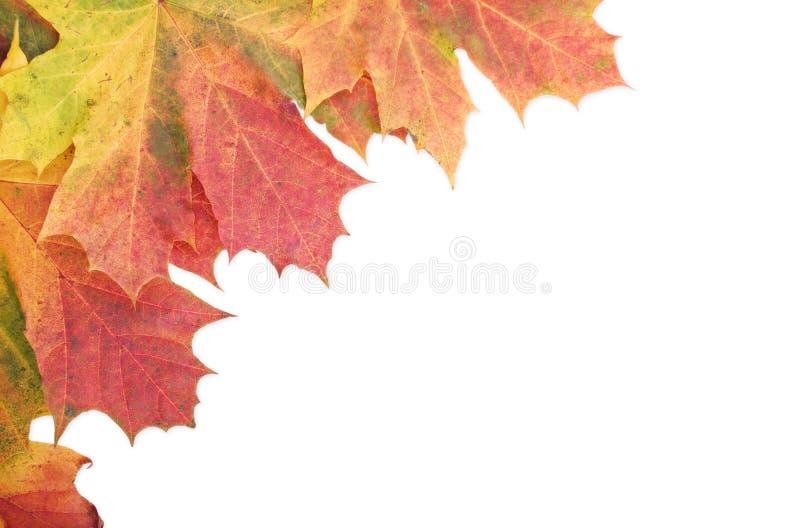 秋天边界边缘叶子白色 库存照片