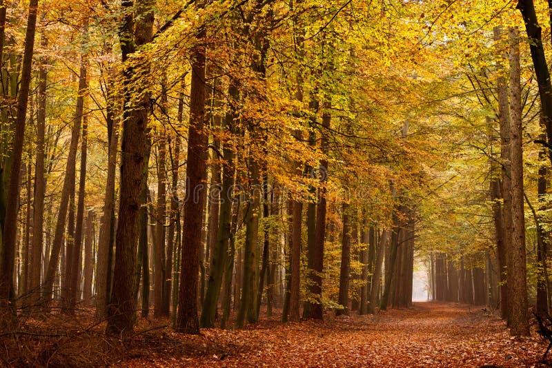 秋天运输路线沙子结构树 图库摄影